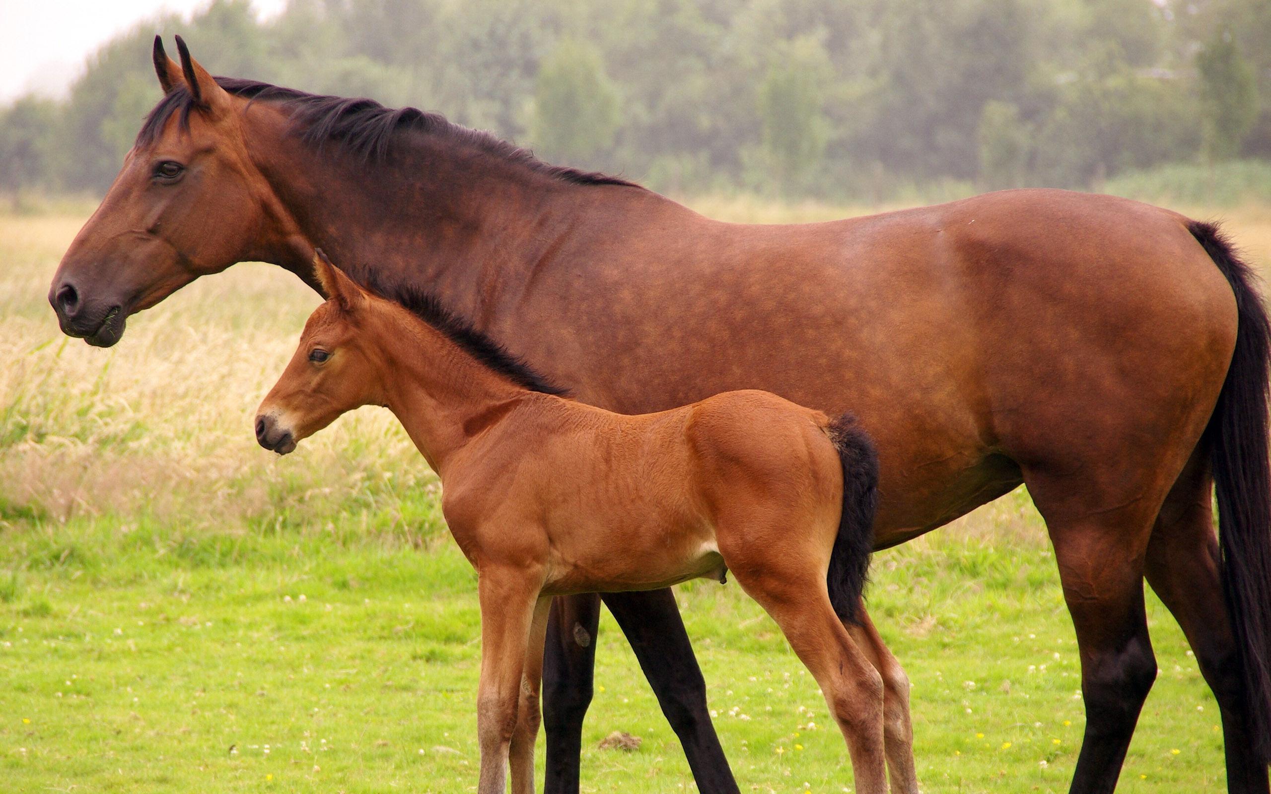 Immuno-Chek G (Foal IgG Test kit),Veterinary Supplies | Veterinary ...